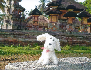 Chili-in-Bali_1