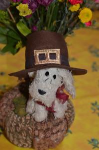 Pilgrim-Pup_1