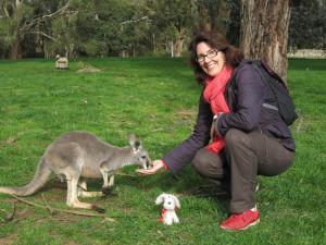 kangaroo-feed_1