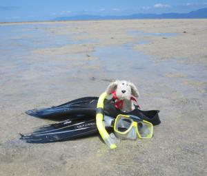 snorkeling-aus_1